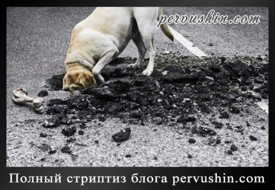Полный стриптиз блога pervushin.com