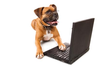 Твиттер для собак