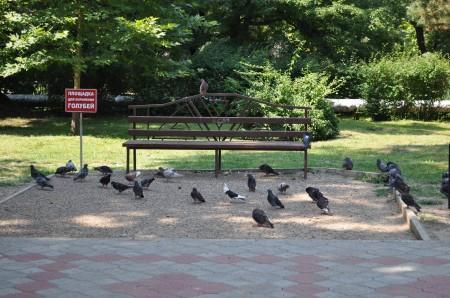 Даже голубей положено кормить в специально отведенном месте