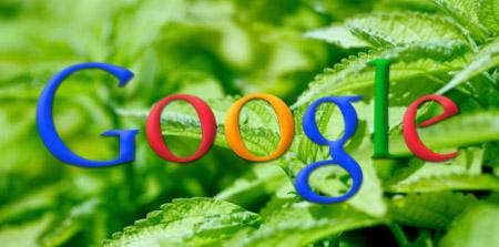 К чему привело обновление Google поискового алгоритма